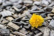 En línea de Entrega de Flores ofrece Florales Únicas de Servicio