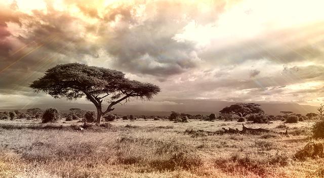 5 Debe Hacer las Cosas Mientras estaba de Vacaciones en el Sur de África