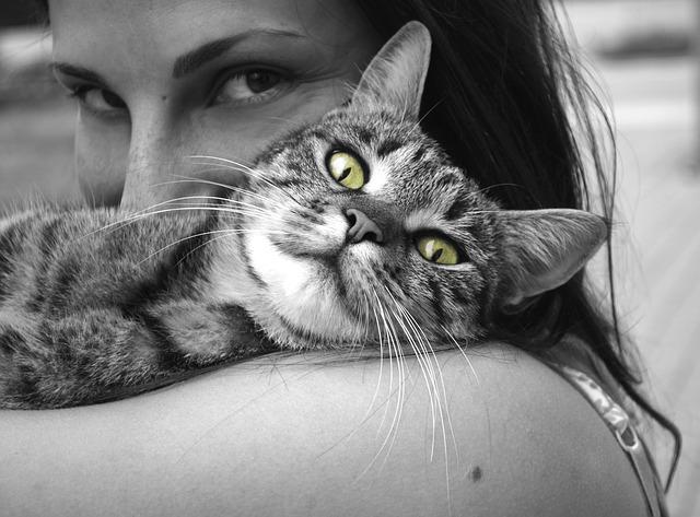 Apuesta en Petkind y la Adicción a la Comida para Mascotas a Mantener a Su Mascota Sana