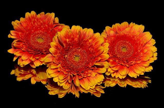 Varios Tipos de Arreglos de Flores