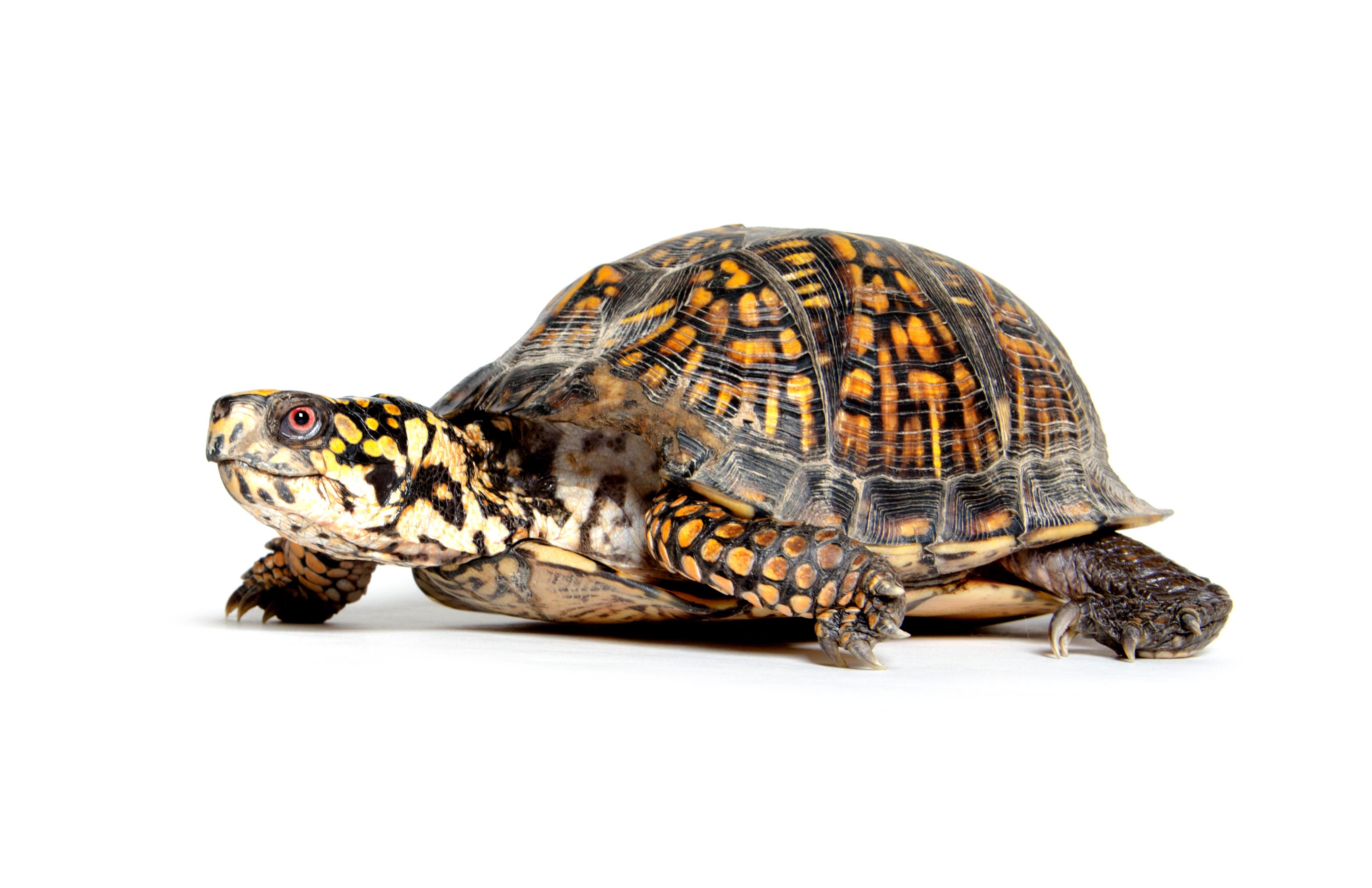 Casos de Salmonela Vinculados a Mascotas Tortugas