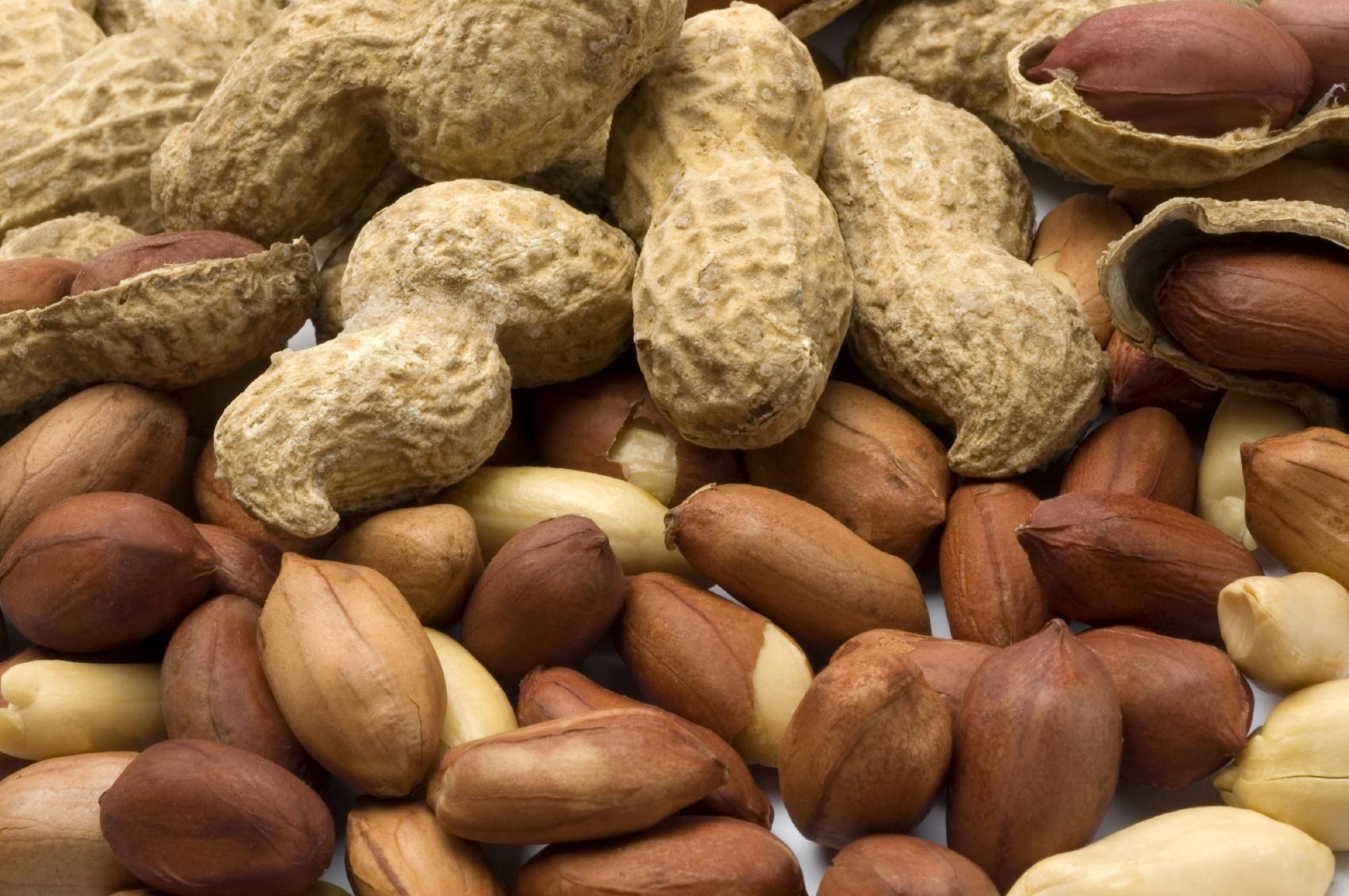 Investigadores Australianos – Descubrimiento en el Tratamiento de la Alergia al Maní