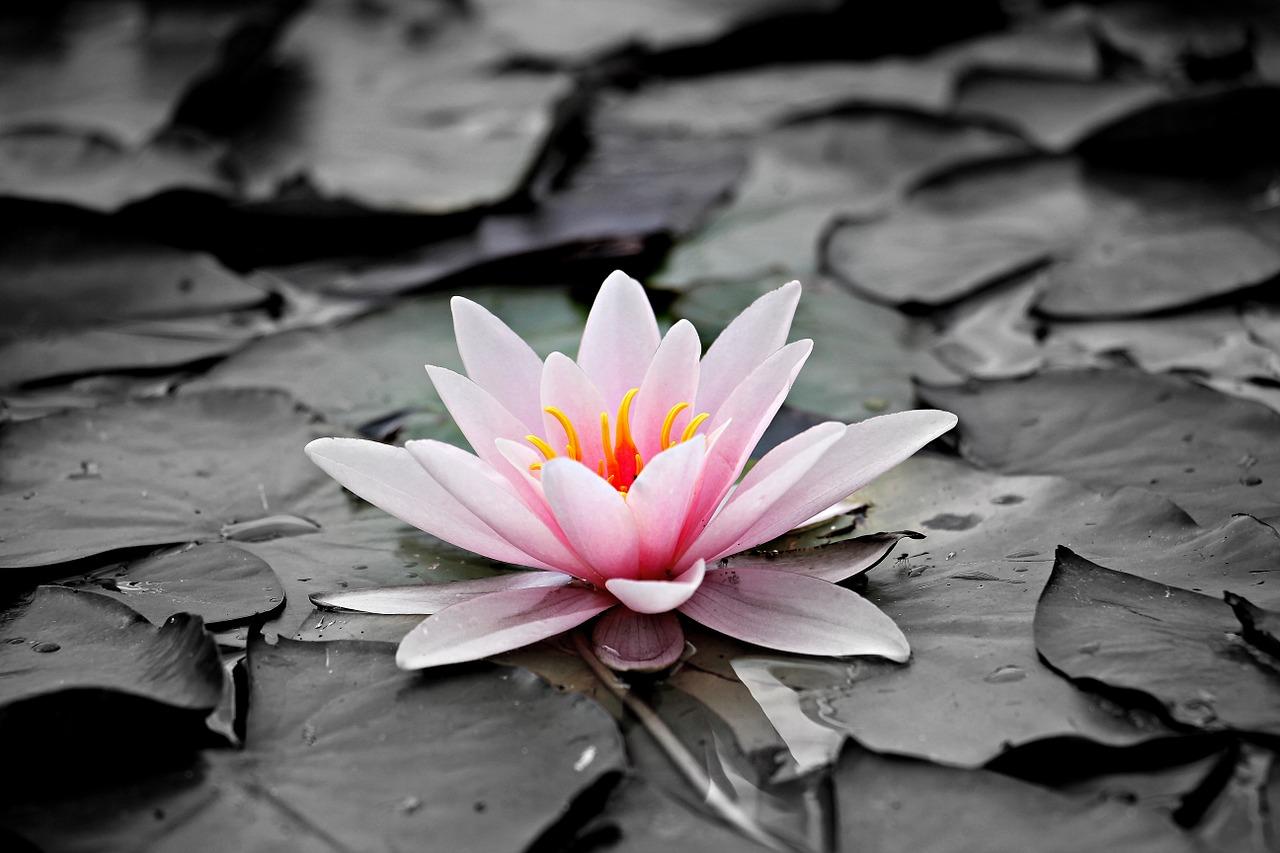 Los científicos han descubierto la primera flor que ha crecido en la Tierra