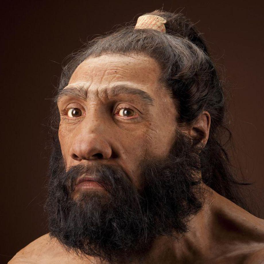 Ciencia de siguiente nivel: Mini cerebros neandertales crecidos en laboratorio